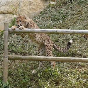 デュラはちび達といつも一緒です 6月中旬のデュラ親子 その4 多摩動物公園