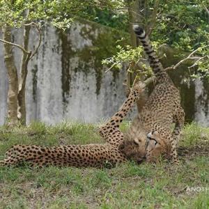 デュラはちび達といつも一緒です 6月中旬のデュラ親子 その5 多摩動物公園