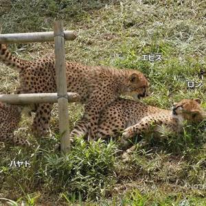 デュラはちび達といつも一緒です 6月中旬のデュラ親子 その6 多摩動物公園