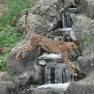 小川越え 9月中旬のデュラ親子 その2 多摩動物公園