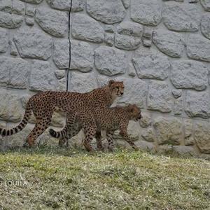 デュラの横 6月中旬のデュラ親子 その7 多摩動物公園