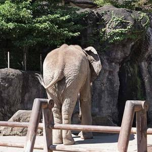 お昼のアフリカゾウ舎 9月中旬のアフリカゾウ舎 その2 多摩動物公園