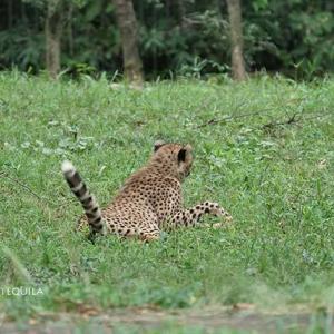 あちこちで追いかけっこが始まります 9月中旬のデュラ親子 その3 多摩動物公園