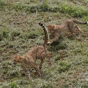デュラの横 6月中旬のデュラ親子 その8 多摩動物公園