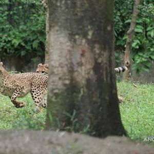 ジャックの親子別け前日のデュラ親子 多摩動物公園