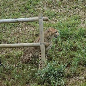 連鎖的に動き出すデュラ親子 6月下旬のデュラ親子 その6 多摩動物公園