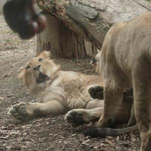ゴロゴロ「ろくいち」 遠征最終日 その9 大森山動物園