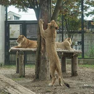 牛骨台の攻防 遠征最終日 その10 大森山動物園