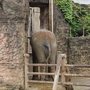 シャワータイム 7月中旬のアフリカゾウ舎 その7 多摩動物公園