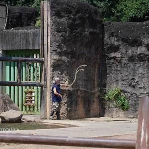 お昼ご飯の時間です 8月下旬のアフリカゾウ舎 その2 多摩動物公園