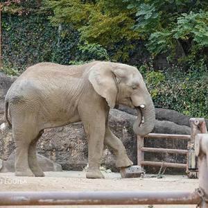 朝のアフリカゾウ舎 11月下旬のアフリカゾウ舎 多摩動物公園