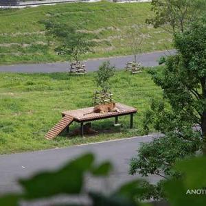 朝のライオン園 スパークの逆鱗に触れないように離れて過ごすジャンプ 7月下旬のライオン園 多摩動物公園