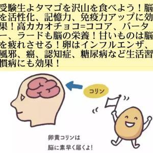 受験生よタマゴを沢山食べよう!脳を活性化、記憶力、免疫力アップに効果!高カカオチョコ=ココア、バーター、ラードも脳の栄養!甘いものは脳を疲れさせる!卵はインフルエンザ、風邪、癌
