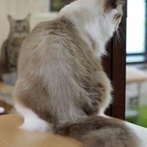 猫さんへの新型コロナウイルス対策について