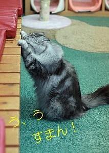 野良猫さんや半野良猫さんのシャンプーについて