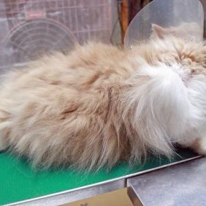 猫は毛がある動物なんです!