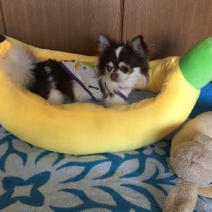 バナナ形ベッド