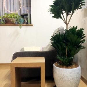 観葉植物でリビングをジャングル化計画