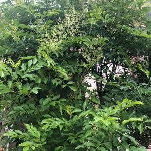 枝ものは和にも洋にも合うインテリア