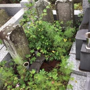 お盆前のお墓の掃除も承ります…☆彡 ( その2 )