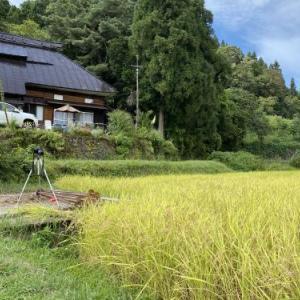 2020.9.23「飯山の農的生活 米作り六年目⑯ 稲刈りを初めて12日目」