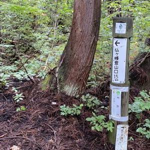 2020.9.19「信越トレイルで出会った花 中古池から戸狩登山口」