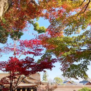 静かな御土居の紅葉