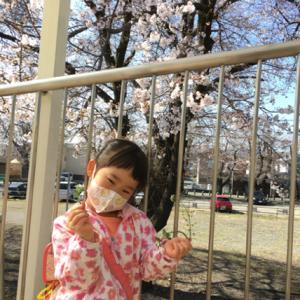 桜が真っ盛り。