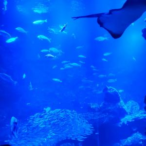 館内は狭いけど迫力あるイルカショーの京都水族館