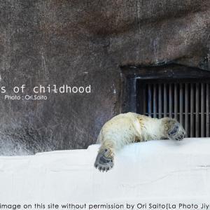 祝!天王寺動物園のしろくま双子誕生!  #ゴーゴとイッちゃんだらけ展2020 #ShilkaGogoExpo2020  #あちこちの白いクマさん #WorldPolarBears
