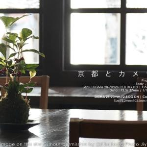 京都とカメラと。逆光シルエット、三条の梅園ティータイム。 #SIGMA #京都 #kyotocity