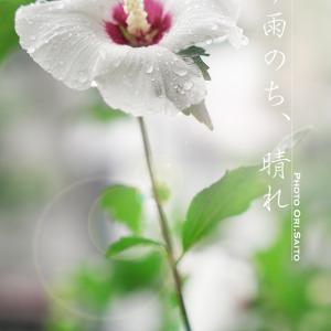 止まぬ雨はないっ!しかし花の写真は花芯か花弁か、って迷っちゃうね。