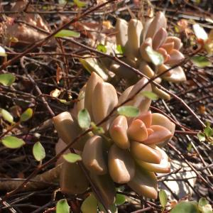 植物の自然美