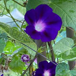 朝活から・・お花に感謝