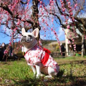 関東三大梅林のひとつ、越生梅林へは見所いっぱい