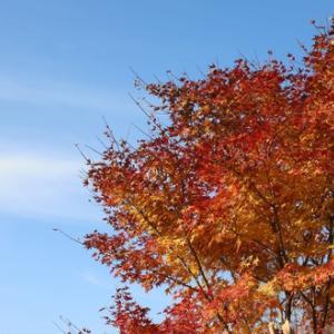 紅葉の清里 美しの森から天女山をハイキング