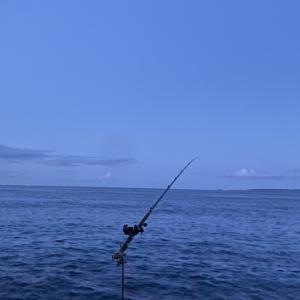 伊豆で真夏の石鯛釣り