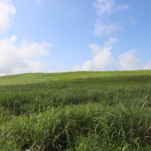 避暑地 霧ケ峰!高原の散歩は夏にはぴったり!