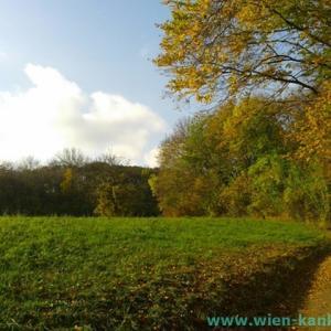 秋のウィーンの森