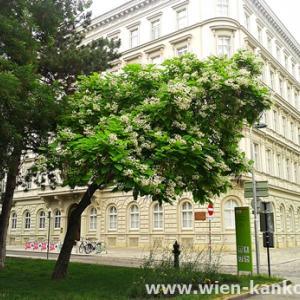 ウィーンによく見られるこの時期の花 356(アメリカキササゲ)