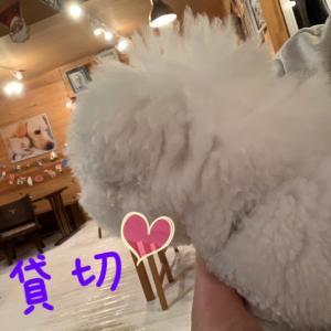 若くん 2歳のお誕生日おめでとう〜☆*:.。. o(≧▽≦)o .。.:*☆