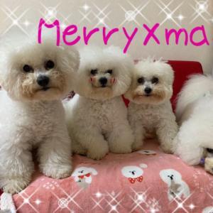 MerryXmas!