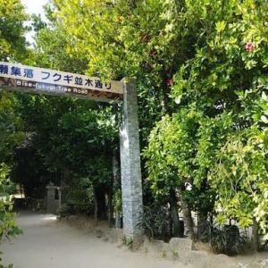 フクギ並木から古宇利島へ