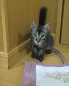 9月の猫ボランティア活動