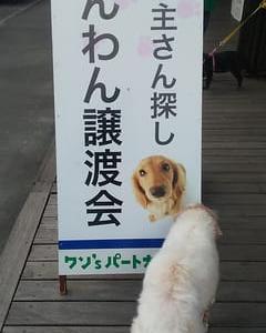 動物愛護法改正草案への意見書:明日まで!
