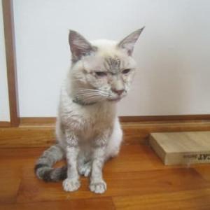 パリス:猫コロナからの生還 飼い主:アトピー完治