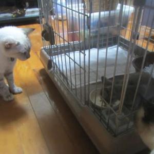 保護猫活動記:経費のやりくりとか