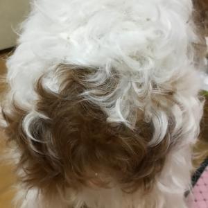クルクルのくせ毛!