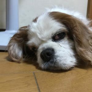 「DOGdog展」の動画!