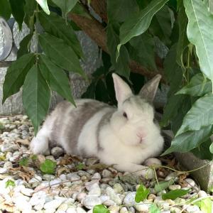 迷い込んできたウサギちゃん